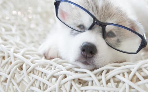 宠物猫狗常见眼睛疾病和眼睛清洁工作