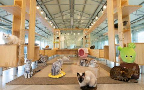 韩国的露天猫咪咖啡厅:铲屎官的最爱