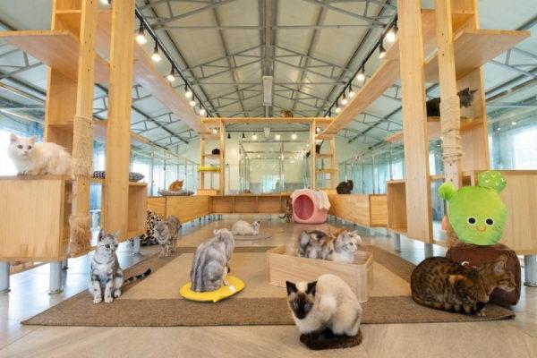 还有猫咪专属的室内空间(图/고양이정원)