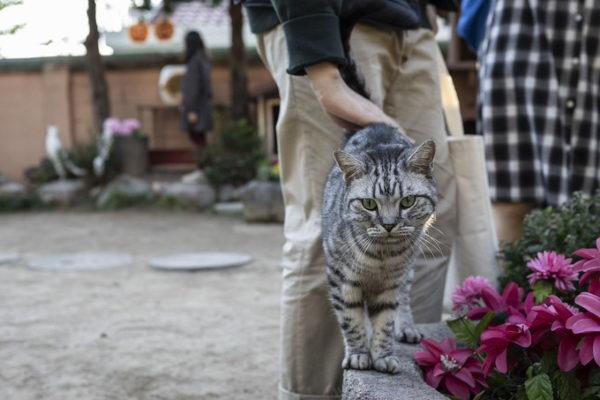这里的猫咪都相当亲人(图/UPI뉴스)