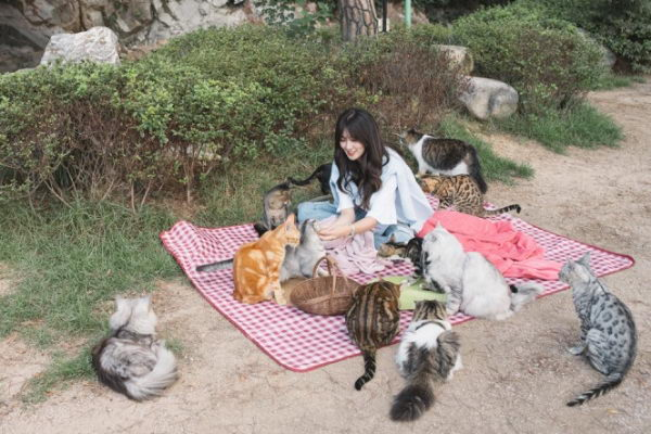 来到这里可以找个喜欢的角落与猫咪一起野餐(图/고양이정원)