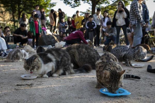 猫咪听到铃铛声都会自动聚集吃饭(图/UPI뉴스)