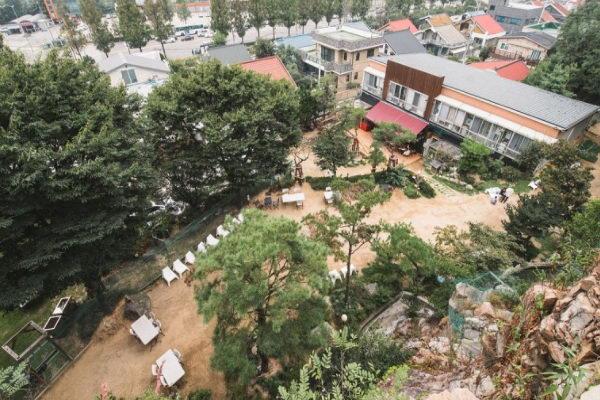 猫猫庭院的占地相当宽广,有足够空间让猫咪自由活动(图/고양이정원)
