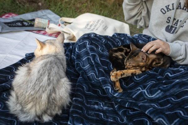 """店家也提供毯子给游客,增加被猫咪""""临幸""""的机会(图/UPI뉴스)"""