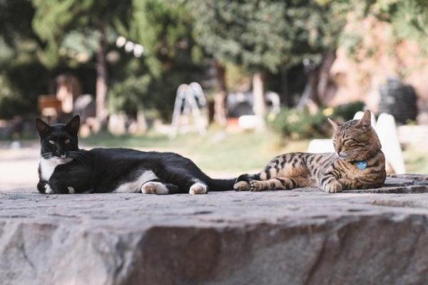 猫咪:欢迎来找我们一起晒太阳,一起享受自然喔!(图/고양이정원)
