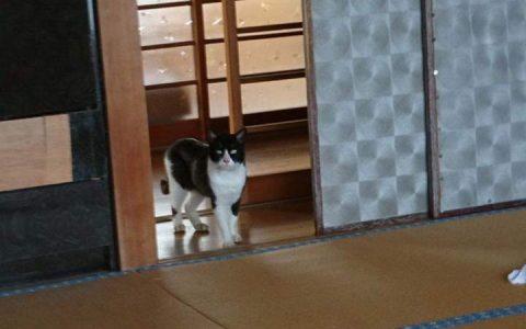 家中竟然闯入一只流浪猫,还用鄙视的眼神看我