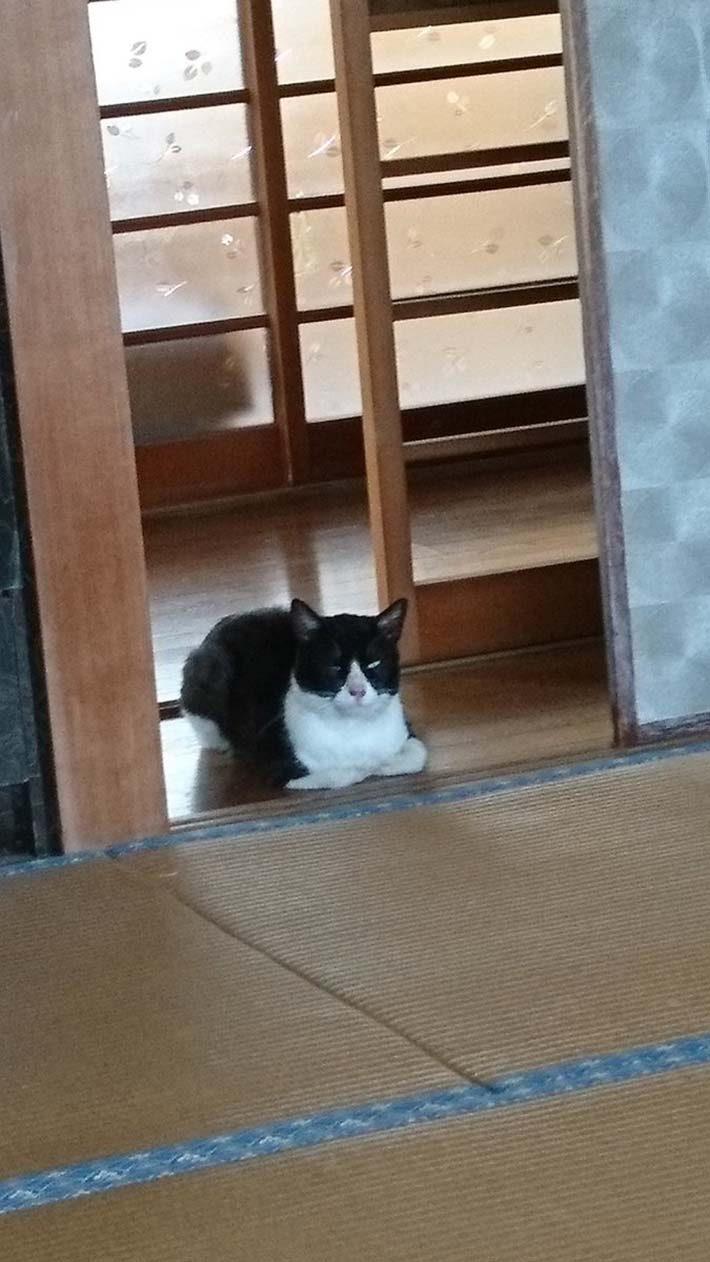日本一位推特主某天家里竟莫名出现一只陌生猫咪。(图/twitter@@furueifighter91)