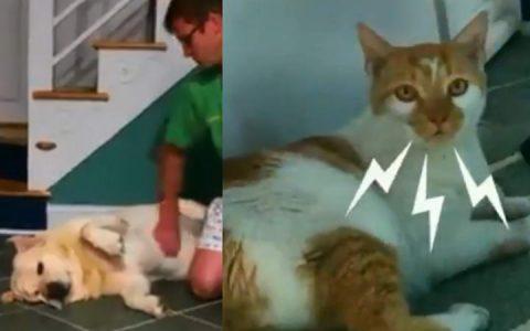 国外网友制作的猫咪和狗狗生活的一天对比图