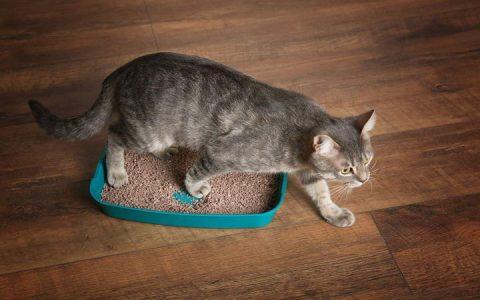 如何训练让你的猫咪停止用尿液做标记