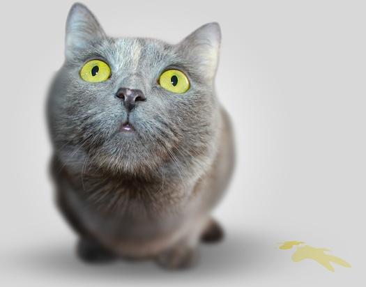 如何训练让你的猫咪停止用尿液做标记,宠物猫到处小便