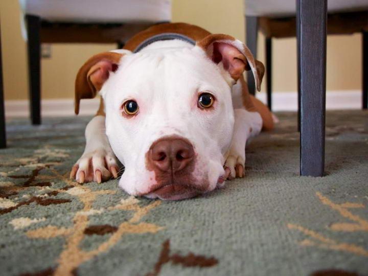 登革热病毒能够传染给宠物狗和猫咪么?