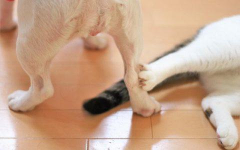狗狗比猫咪更加亲近人类?这是迷思还是事实?