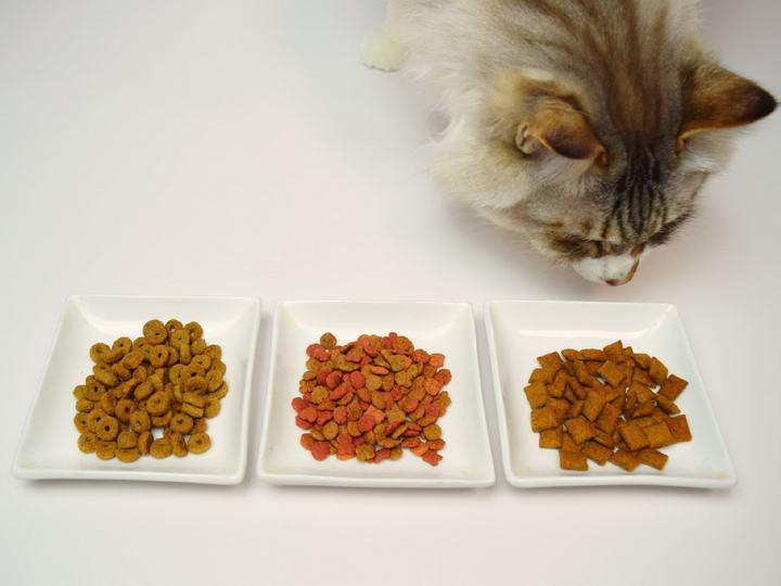 猫粮选购的时候不要选择分装的小包装猫粮