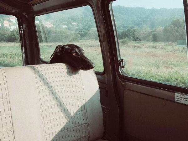 夏天一定不要将宠物单独放在汽车内