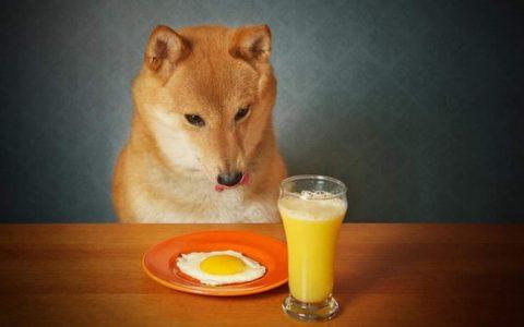 狗狗能吃鸡蛋么?