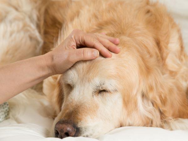大中型犬要注意了:可怕的狗狗胃扭转