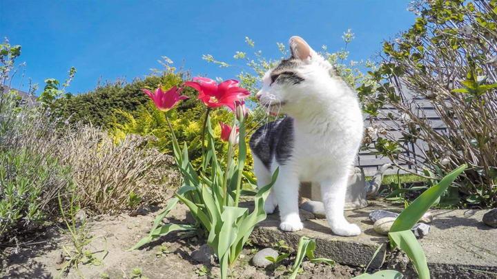 常见容易被宠物猫和狗狗误食的有毒植物及其后果