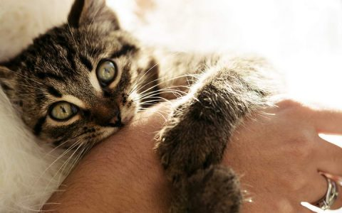 猫咪咬人屡教不改:换个思路想想不要只制止它咬人