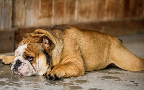 哪些猫咪和狗狗比较容易患皮肤病