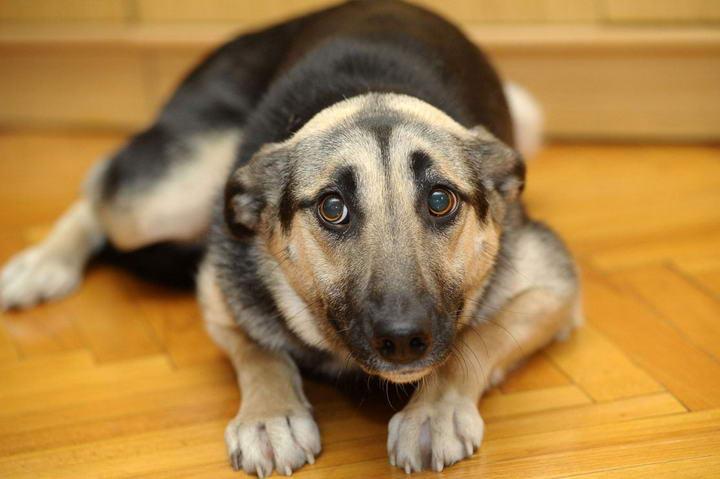 如何帮助胆小怯懦的狗狗建立信心?