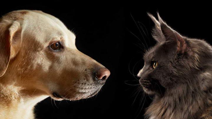 为什么宠物猫咪和狗狗的鼻子成天都湿漉漉的?