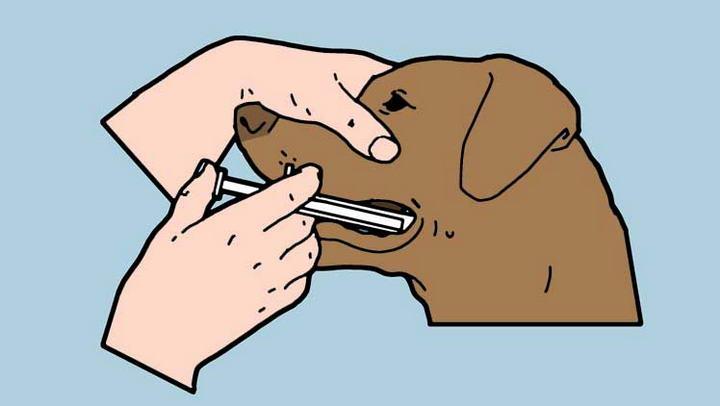 如何给猫咪和狗狗喂药?