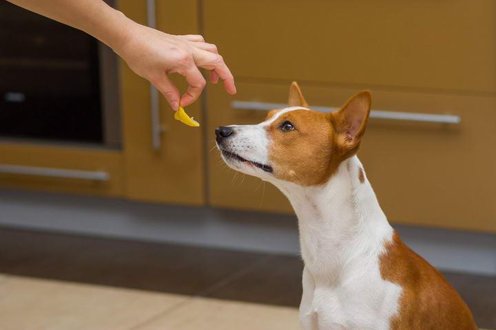 欧米伽3(Omega-3)脂肪酸和Omega-6对宠物的重要作用