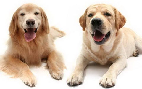结扎绝育对公狗和母狗有哪些好处?