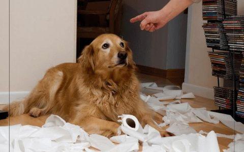狗狗真的明白你在责骂它吗?