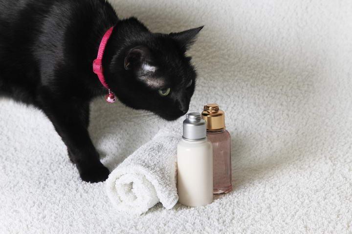 家里点香薰和精油之类的香氛产品会导致猫咪健康问题