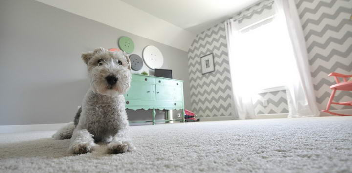 防患于未然,避免家中各种对狗狗造成危险的潜在威胁