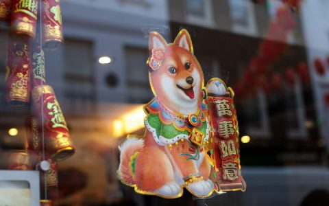 农历新年春节的时候应该如何照顾狗狗