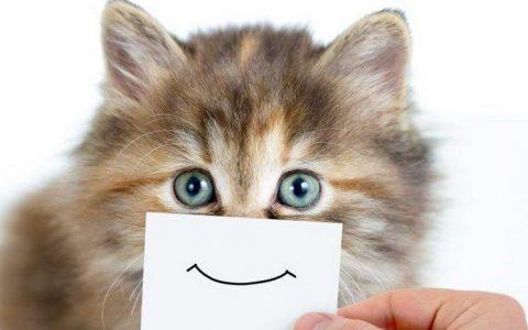 如何判断我的猫咪快不快乐?