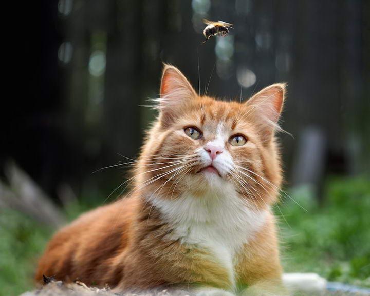 宠物猫咪和狗狗被蜜蜂叮咬了怎么办?