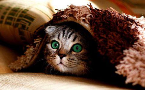 为什么猫咪喜欢躲藏在阴暗角落里?宠物猫为什么捉迷藏?