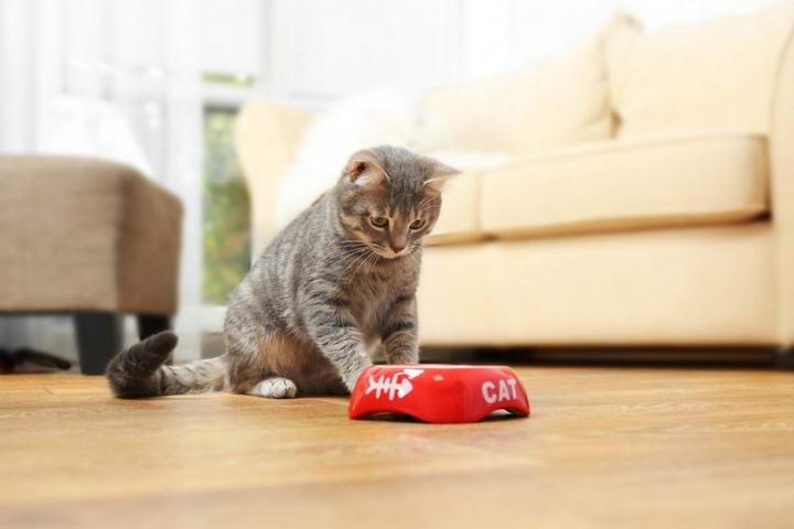 猫咪体重异常下降的4种可能原因
