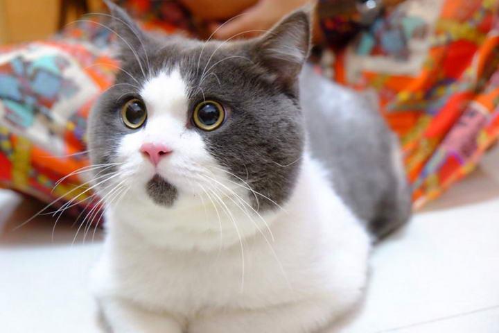 不健康的碗会导致猫咪下巴上有黑点点粉刺