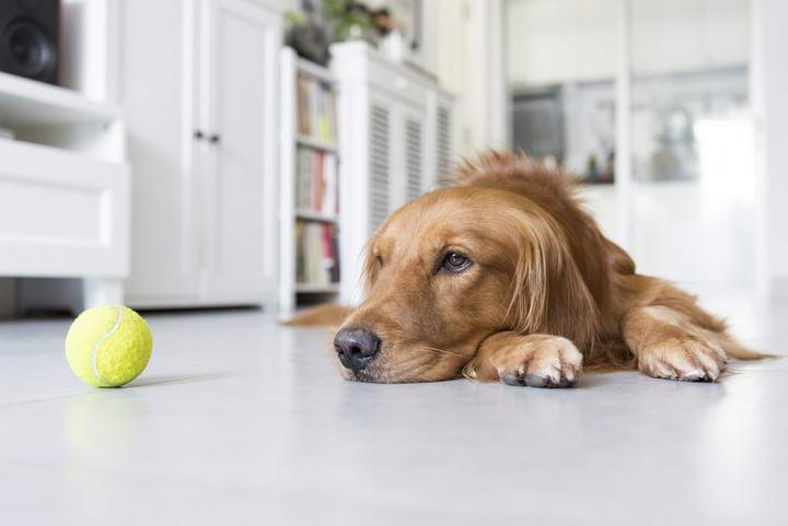 狗狗急性肠胃炎常见的四大症状