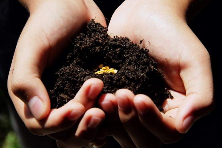 五步教你自己种植猫草