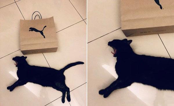 黑猫躺地上伸长身体神似PUMA彪马标志