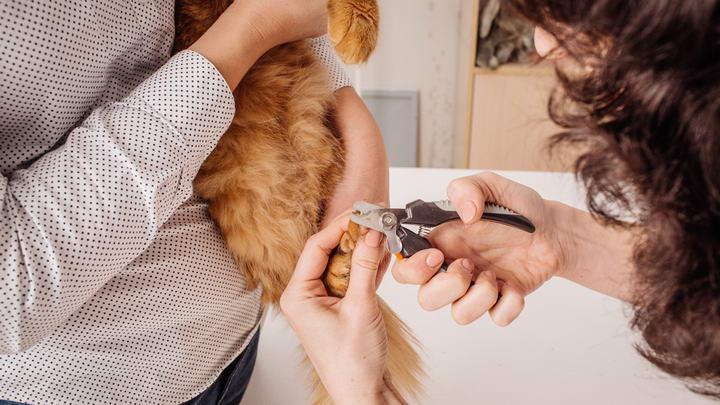如何给猫咪爪子修剪指甲