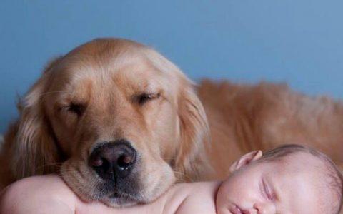适合家中有小朋友养的10种宠物狗狗