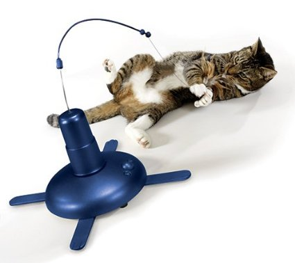 猫咪咬人怎么办?如何纠正咬人的宠物猫【幼猫篇】