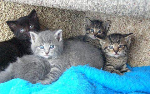 猫咪眼睛颜色有哪几种?