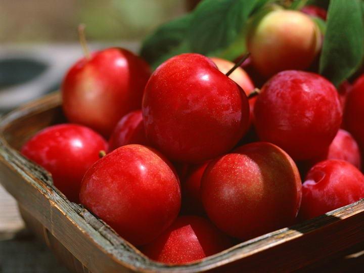 狗狗可以吃的10种人类食物宠物鲜食食材苹果