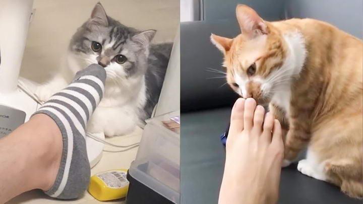 猫咪闻你的臭脚为什么会嘴巴张开:原来这叫做裂唇嗅