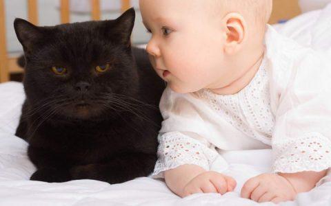 为什么猫咪对小孩特别有耐心?宠物猫容忍婴儿