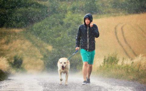 下雨天遛狗四大注意事项
