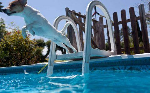夏天关于宠物狗狗的5个安全提示