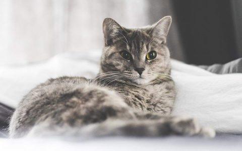 猫咪是否能够认出它的名字?宠物猫能记住自己的名字么?